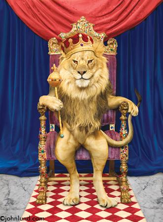 benar-benar-raja-singa2